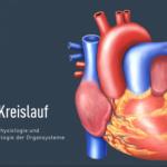 Herz-Kreislauf