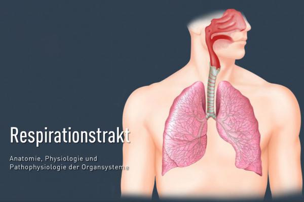 funktion der äußeren atmung