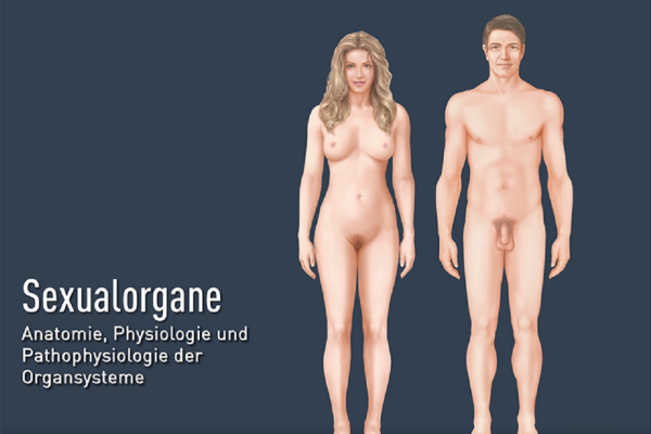 Sexualorgane