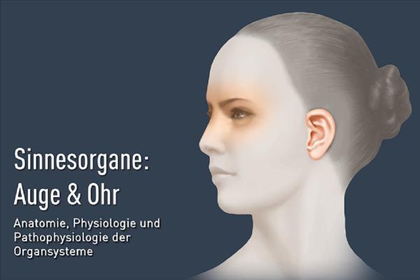 Sinnesorgane Auge und Ohr